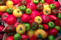 Tomates anciennes andines cornues, Les Saveurs de Chailly