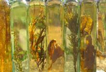 Vinaigre de miel au basilic