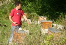 les abeilles de papae