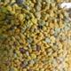 les abeilles de Papae, pollen