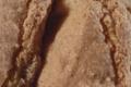 Biscuit cuillère à l'épeautre