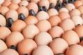 œufs de poules élevées en plein air