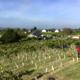 Vignobles du Paradis