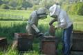 Les ruchers de Verneuil