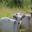 Prairie des vallons