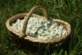 Les herbes de l'écureil, GAEC Plantago