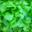 Feuille de chêne bio