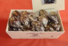 Les huîtres de Céline