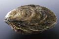 les huîtres de Céline, Pieds de cheval