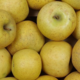 Pomme Belchard Chanteclerc