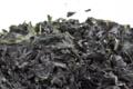 Algue Wakamé séchée