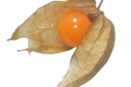 Amours en cage Biologiques (Physalis Péruviana)