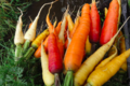 Les Serres de Pont-Odet, carottes