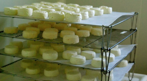 Chèvrerie des Landes Du Canut, fromages de chèvre bio