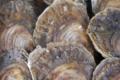 La perle des grèves,    Douzaine d'Huîtres plates n°3