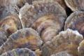 La perle des grèves,  Douzaine d'Huîtres plates n°4