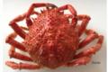 Araignée Femelle cuite