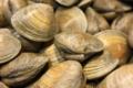Les Viviers d'Armor, clams