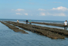 Jardin du fruit de mer