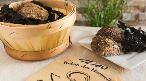 « Belon », l'huitre plate d'Ille-et-Vilaine