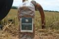 Fettuccine à la truffe noire
