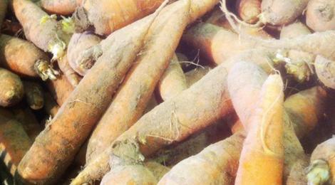 Les délices de la campagne, carottes des sables