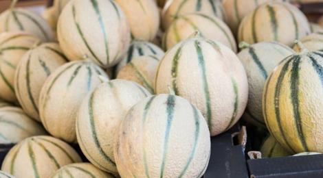 Les délices de la campagne, melons