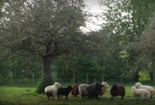 Les Coteaux du Linon