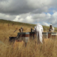 Les ruchers du pays blanc