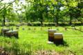 Miellerie des vallons de Vilaine, miel d'acacia