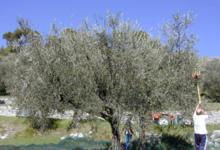 Domaine Lessatini