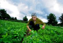 Annie Bertin, Les Légumes de Blot