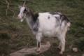 Chèvrerie de Keraden