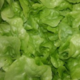 Salade Chêne blonde