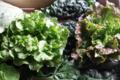 salades bio