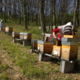 Les ruchers du Tigou