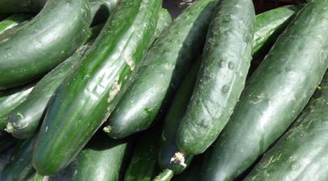 La Ferme de Mangorvenec, concombres