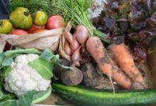 panier de légumes bio de septembre