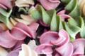 la fabrik des 1001 pâtes, Fusillis séchés 3 couleurs