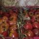 Le Potager De Kergistalen , tomates