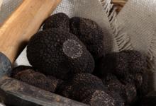 La truffe du Ventoux, Truffes fraiches « Tuber Melanosporum » (entières)
