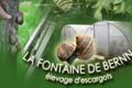 La Fontaine de Bernn, escargots