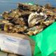 huitre creuse n°2 : huître de 86 à 110 g - 4 années de pousse