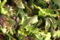 salade mesclun bio