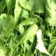 salade roquette bio