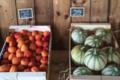 Moulin Mas de Daudet, melon