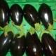 Ferme Saint-Désiré, aubergines