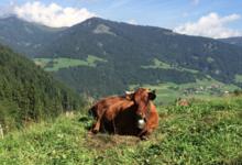 Coopérative fruitière du Val d'Arly