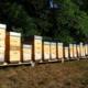 Le rucher de Grand-Père, apiculture Bitzner