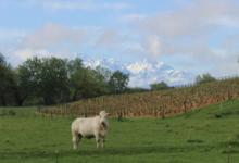 Vins de Savoie Daniel Billard
